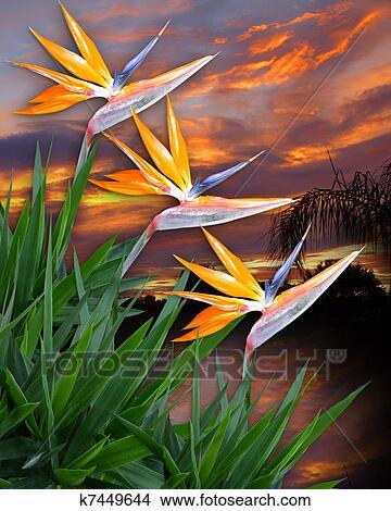 Dessins Oiseau Paradis Fleurs K7449644 Recherche De Clip Arts
