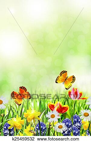 Stock Photo Of Spring Flowers Daffodils And Tulips K25459532