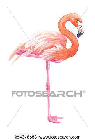 Dessin Flamant Rose Aquarelle K54378583 Recherchez Des Cliparts