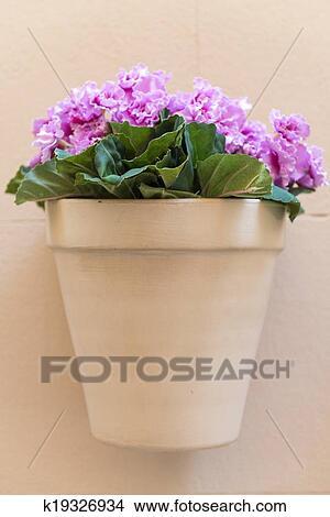 Banque De Photo Fleurir Pot A Fleurs Roses Accrocher Dessus A