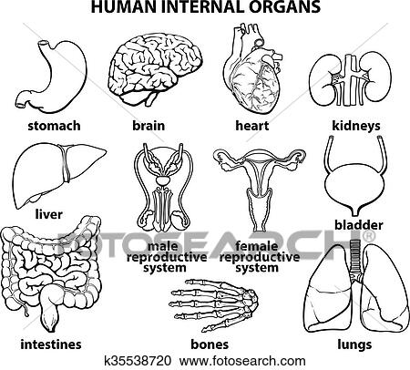 Clipart of the internal organs of man set k35538720 search clip clipart the internal organs of man set fotosearch search clip art ccuart Images
