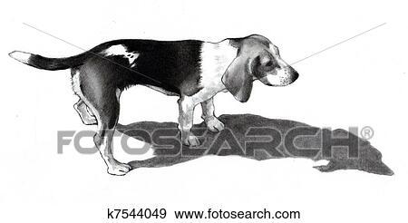 Colección De Ilustraciones Dibujo A Lápiz De Un Sabueso Perro