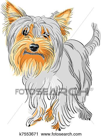 Clipart Of Vector Pedigreed Dog Yorkshire Terrier K7553671 Search
