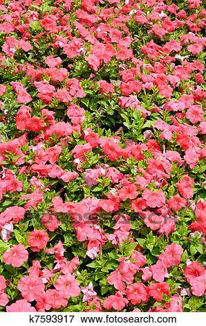 Pink flowers in garden background Stock Photo