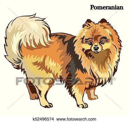 Pomeranian Vector Illustration Clipart