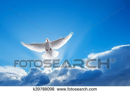 Pictures Of White Dove Symbol Of Faith K39788098 Search Stock
