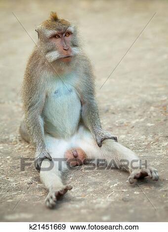 معرض الفوتوغراف - ذكر من اْنسان, أنثى القرد, رسوم هزلية ...