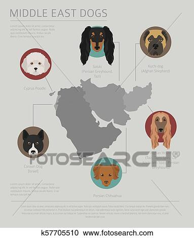 Dogs by country of origin. Near East dog breeds, persian ...