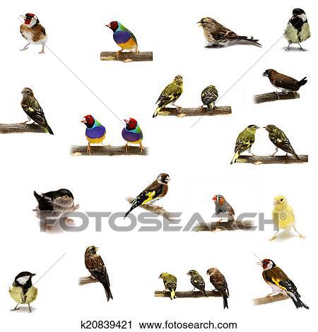 μεγάλο πουλί 3D