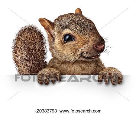 Disegno carino scoiattolo k20383793 cerca clipart for Stampe da appendere