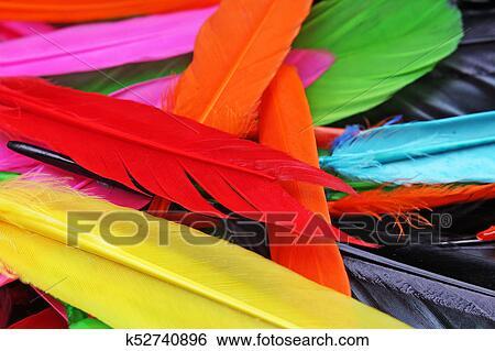 Hermoso Arco Irirs Color Coloreado Pájaro Feathers