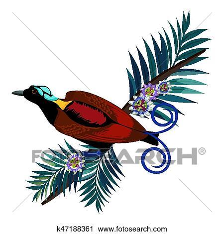 Clipart Wilson S Oiseau De Paradis Dans Brun Couleur Isole