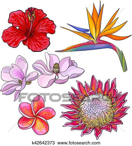 Tropical Flowers Hibiscus Protea Plumeria Bird Of Paradise