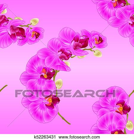 Seamless Texture Beautiful Phalaenopsis Orchid Purple Stem With Flowers And Buds Vector Clipart K52263431 Fotosearch