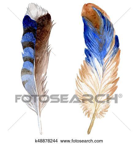 水彩画 鳥の羽 から 翼 Isolated イラスト K48878244 Fotosearch