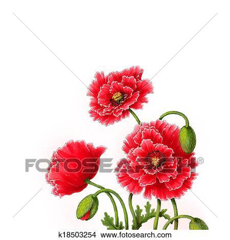 Dessins Pavot Fleurs Aquarelle Illustration K18503254
