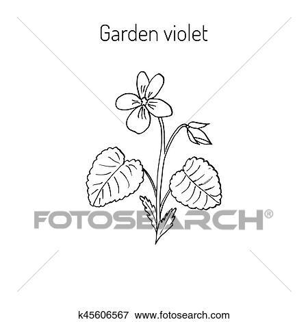 Clipart Bois Fleur Violette K45606567 Recherchez Des Cliparts