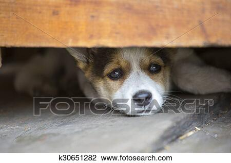 sad puppy lay on the floor Stock Image