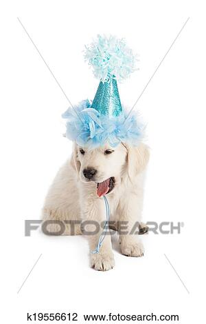 Puppy In Party Hat Yawning Stock Photo K19556612