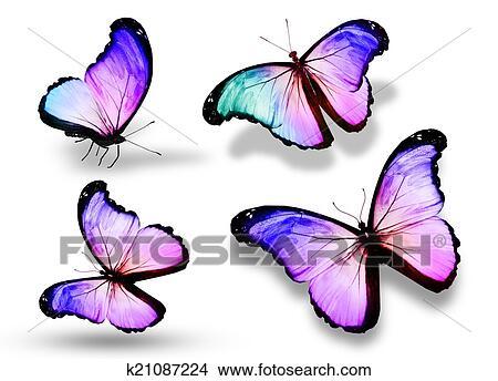 Kresby Ctyri Barva Motyl K21087224 Hledat Klipartove Ilustrace