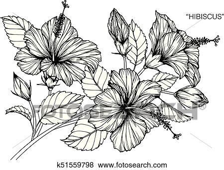 Hibiscus flower dessin et croquis noir blanc line art clipart k51559798 fotosearch - Dessin hibiscus ...