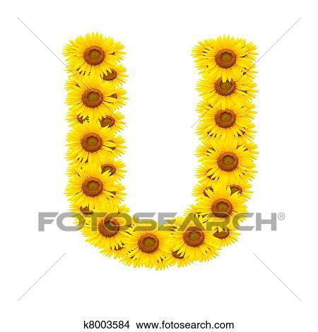 Alphabet U, sunflower Stock Illustration   k8003584 ...