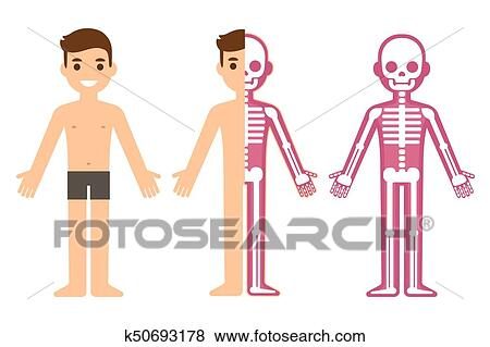 Clip Art Of Male Skeleton Anatomy K50693178 Search Clipart
