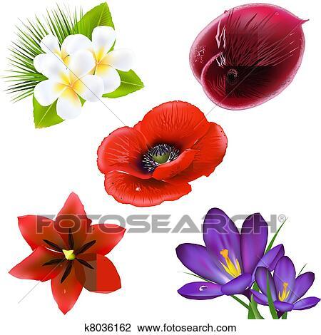 Ensemble De Realiste Fleurs Clipart K8036162