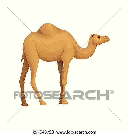Detailed flat vector icon of Egyptian camel  Desert animal with hump on its  back  Element for promo poster or flyer of travel agency Clipart
