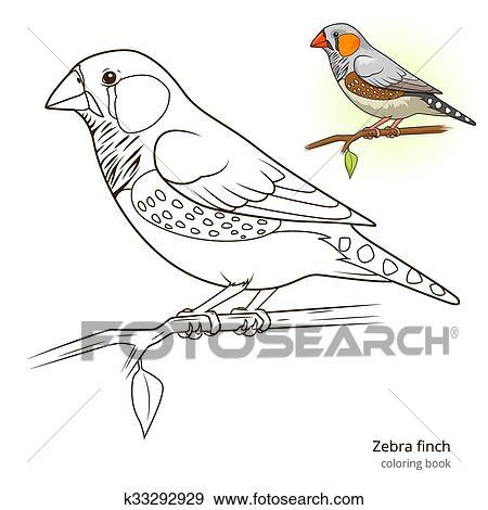 Zebra finch bird coloring book vector Clip Art