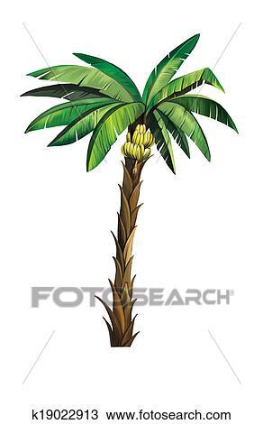 Disegno palma pianta albero isolato bianco for Palma pianta