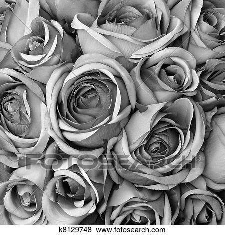 bilder hintergrund mit rosen in schwarz wei k8129748 suche stockfotos bilder print. Black Bedroom Furniture Sets. Home Design Ideas