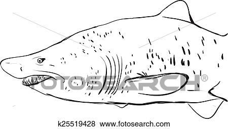 Clip Art Gran Squalo Bianco Underwater Sketch Nero Contorno