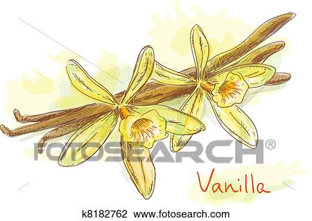 Clipart fleur vanille s ch pods k8182762 recherchez des clip arts des illustrations - Vanille dessin ...