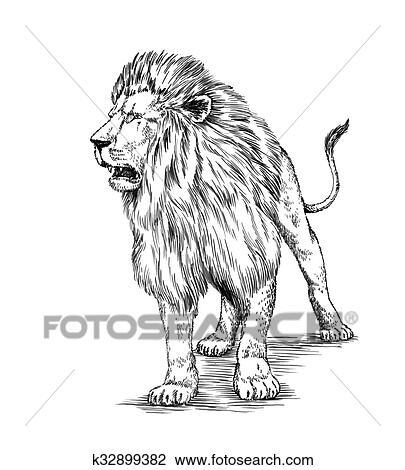 ブラシ 絵 インク ドロー 隔離された ライオン イラスト スケッチ