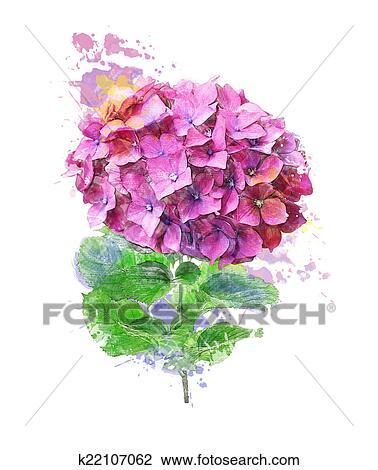 Clipart Aquarelle Image De Hortensia Fleur K22107062