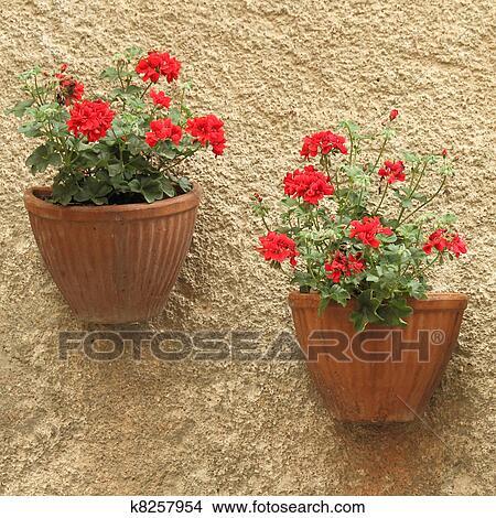 Blumentöpfe, auf, wand Bild | k8257954 | Fotosearch