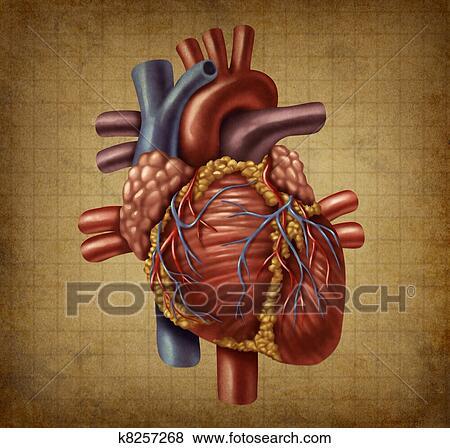 Stock Illustration - menschliches herz, alt, grunge, medizinisches ...