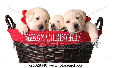 Christmas Puppies.Christmas Puppies Stock Image
