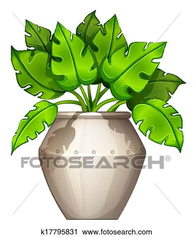 clipart of a plant with a heart shaped leaves k17795831 search