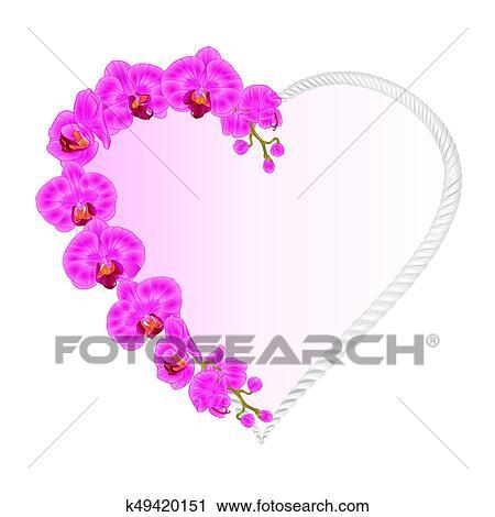 Frame Heart Shaped Orchid Phalaenopsis Purple Flowers Tropical