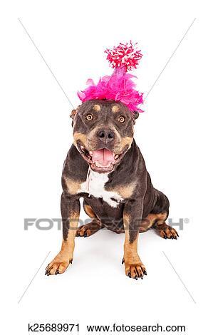 Archivio Fotografico Buon Compleanno Cane In Cappello Partito