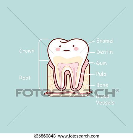 Clipart - caricatura, diente, anatomía, gráfico k35860843 - Buscar ...