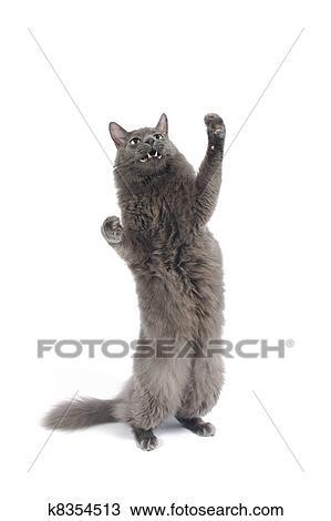 Colección de foto - gato, el estar parado en las piernas traseras ...