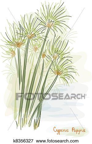 Papyrus Plant Cyperus Papyrus Clipart