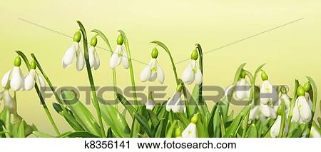 Stock Photography Of Spring Flowers Header K8356141 Search Stock