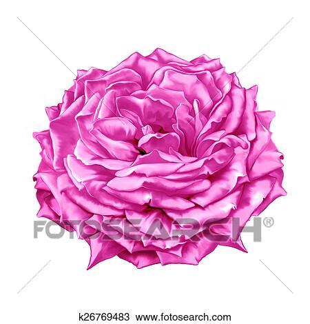 Dessin de rose rouge colorier les enfants - Dessin fleur rose ...