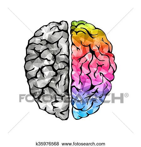 clip art of creative concept of the human brain k35976568 search rh fotosearch com clipart brain dead clipart branches