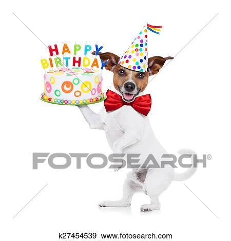 Stock Fotografie Gelukkige Verjaardag Hond K27454539 Zoek Stock
