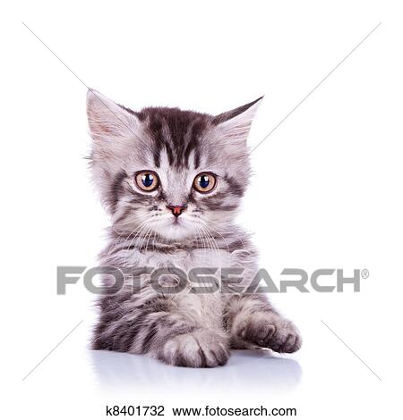 stock photo of adorable silver tabby cat k8401732 search stock